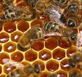 О лечении мёдом